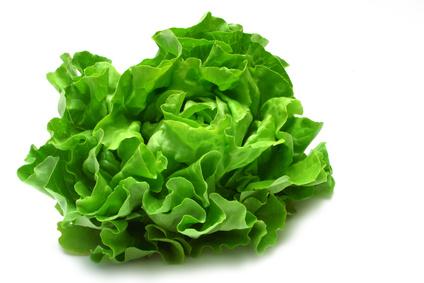 Salát byl pravděpodobně vyšlechtěn z divoce rostoucí lociky ...